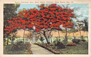 PALM BEACH FLORIDA~ROYAL POINCIANA TREE-RITTER ESTATE GROUNDS POSTCARD 1920s