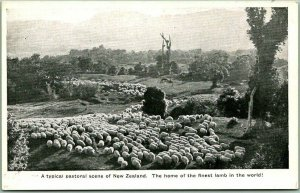 NEW ZEALAND Postcard Sheep Herd Pastoral Scene Finest Lamb in the World Unused