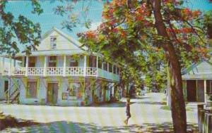 Florida Key West Royal Poinciana Street Sceene 1963