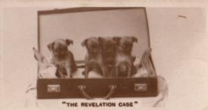 The Revelation Briefcase Dog Antique German Real Photo Cigarette Card