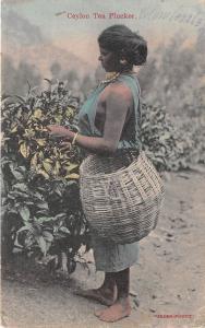 BR62506 ceylon sri lanka tea plucker types folklore woman