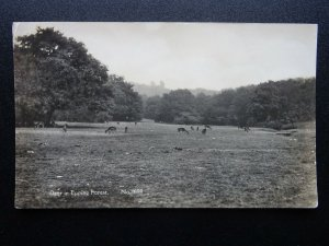 London Essex DEER in EPPING FOREST c1930's RP Postcard