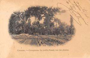 Guinea Conakry Camayenne, jardin d'essai, vue des plantes 1903