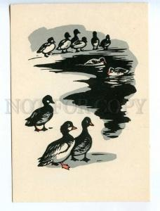 238755 RUSSIA HUNT Zakharov ducks in open water old engraving