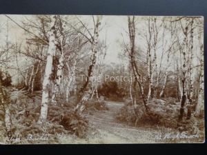 Essex: SIlver Birches near HIGH BEACH c1919 RP