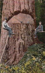 BREMERTON , Washington, 1909 ; Loggers taking a break from cutting tree