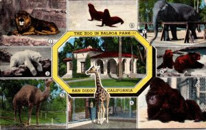 California San Diego The Zoo In Balboa Park Multi View