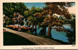 Maine Greetings From Tacoma Lake