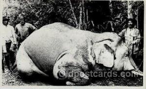 Elephant Tusk Postcard Postcards