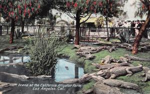 Scene At the California Alligator Farm, Los Angeles, CA, Early Postcard, Unused