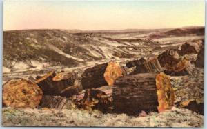 Petrified Forest National Park AZ Postcard Logs in Second Forest HAND-COLORED