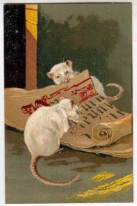 White Mice - Rats
