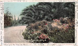 In Canyon Crest Park, Redlands, California, Very Early Postcard, Used in 1906