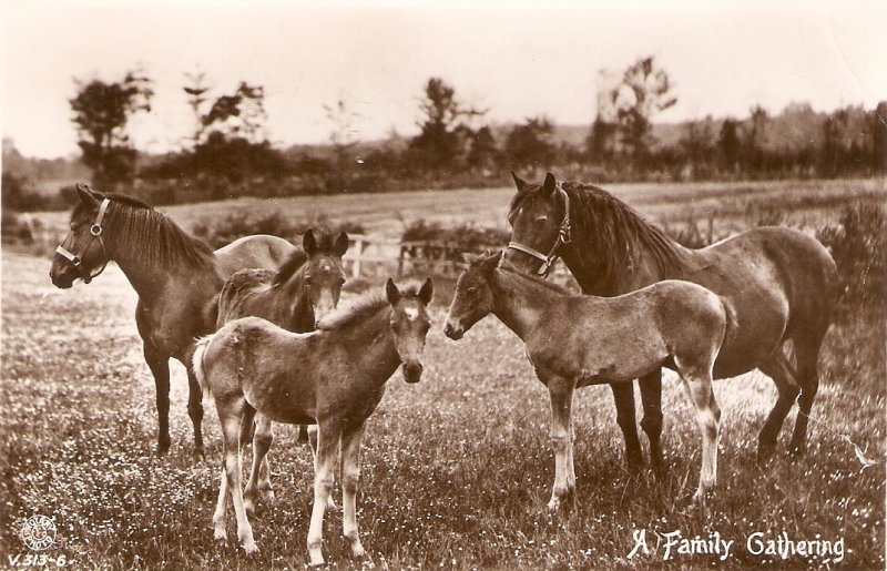Horses and foals. A Family Gathering Nice old vintage English postcard