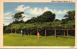 North Carolina Monteo Mother Vineyard Curteich