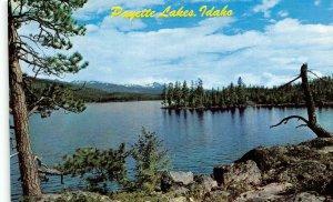ID, Idaho  PAYETTE LAKE SCENE  Valley County   c1960's Chrome Postcard