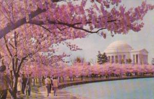 Washington D C Jefferson Memorial At Cherry Blossom Time