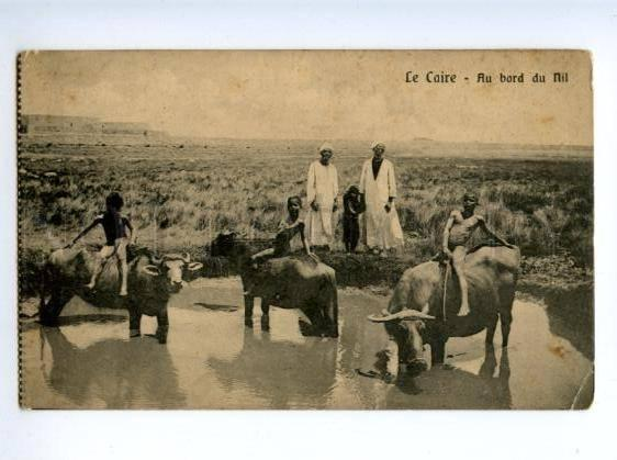 172390 EGYPT CAIRE nude boys on buffalo vintage postcard