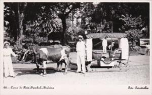 Portugal Madeira Carro de Bois Funchal Locals With Ox Cart Real Photo