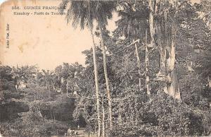 BR57047 Guinee konakry Foret de toumdo guinea   Africa