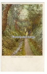 tq2722 - Guernsey - Early View,Tree Cover on Water Lane, Moulin Huit - Postcard