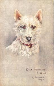 Raphael Tuck Signed Maude West Watson West Highland Terrier Postcard