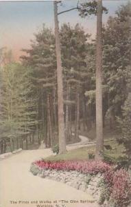New York Watkins Glen The Pines And Walks At The Glen Springs Albertype