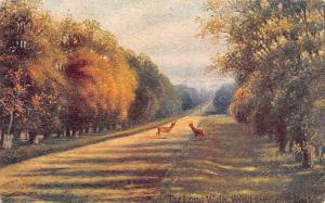 The Long Walk, Windsor and Eton, Davidson Bros Melborough 1904