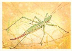 Animals insects Postcard Saga Pedo Pall cricket