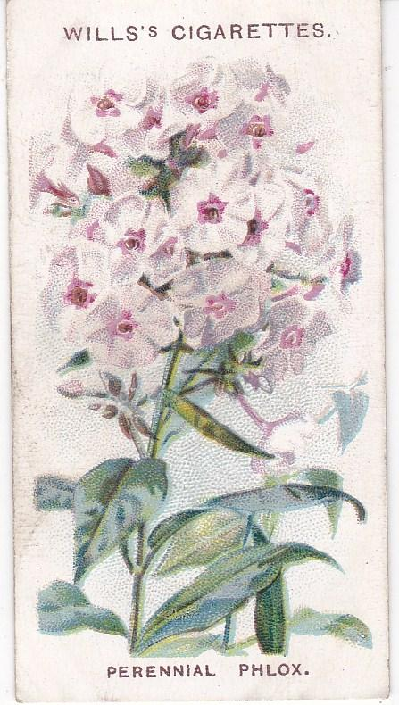 Cigarette Card Wills Old English Garden Flowers No 10