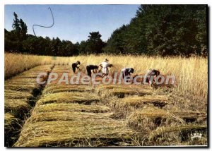 Postcard Modern Parc Naturel Regional des Landes de Gascogne De Luxey sawing rye