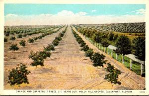 Florida Davenport Holly Hill Groves Orange and Grapefruit Trees