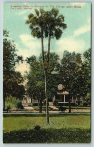 De Land Florida~College Arms Hotel~Branched Palms Across From House~c1910