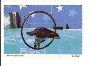 Seal Show Spectacular, Seaworld, Florida,