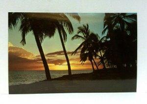 Caribbean Sunset Palm Trees Ocean Postcard