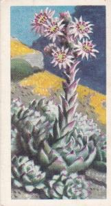Trade Card Brooke Bond Tea Wild Flowers Series 2 No 14 House Leek