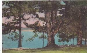 New Hampshire Meredith Cygnet Cabins Lake Winnipesaukee Albertype
