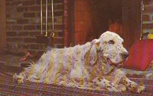Dogs English Setter By The Fireside