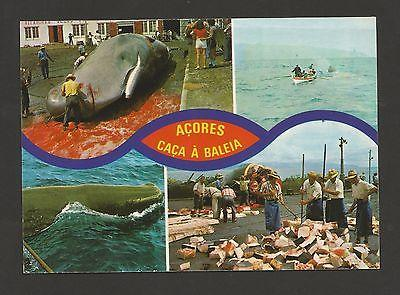 1960years POSTCARD AZORES WHALES WHALING WHALE  BALEINES ...