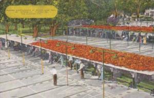 Florida St Petersburg Shuffleboard Courts At Mirror Lake Park