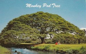 Hawaii The Hawaiian Monkey Pod Tree