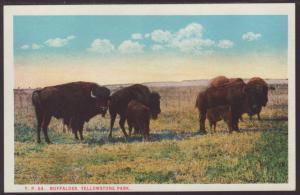 Buffalos,Yellowstone Postcard