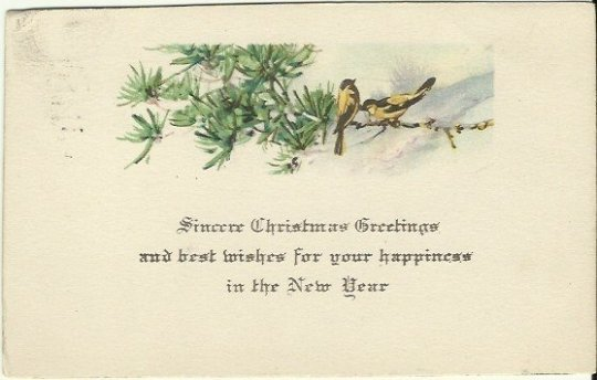 Golden Finch Birds Sitting on a Pine Bough Sincere Christmas Greetings.. 1919