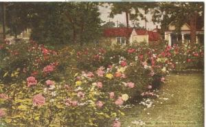 Roses all Year Around, early 1900s unused Postcard