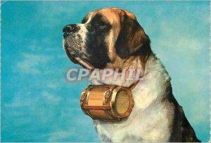 Postcard Modern Saint Bernard Dog