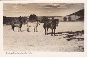 New York Greetings From Mountainville With Horses Real Photo