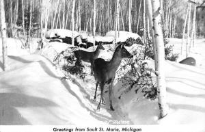Sault Ste Marie Michigan Deer In Snow Real Photo Antique Postcard K63193