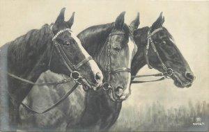 Horses old postcard