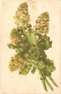 Beautiful flowers Nice vintage German  postcard