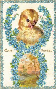 Easter~Chick in Forget-Me-Nots Figure 8~Meadow Vignette~White Back~1907 IPCC